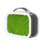 green leaf lunchbox