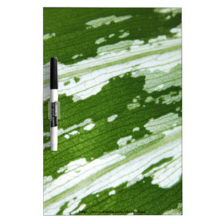 Green leaf macro shot under natura sunlight. dry erase board