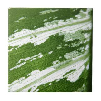 Green leaf macro shot under natura sunlight. tile