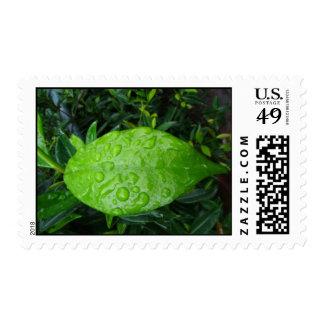 Green Leaf Postage