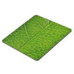 green leaf puzzle coaster
