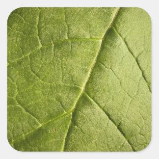 Green Leaf Rhubarb Square Sticker