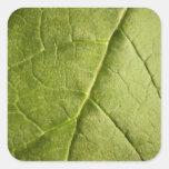 Green Leaf Rhubarb Sticker