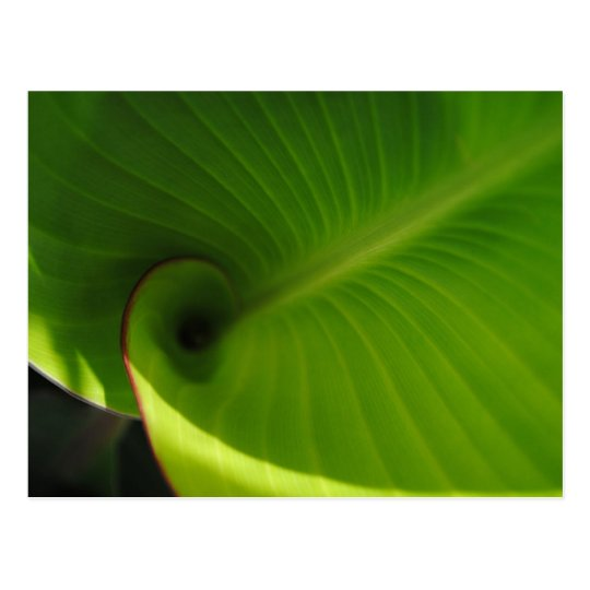 Green Leaf Swirl Postcard