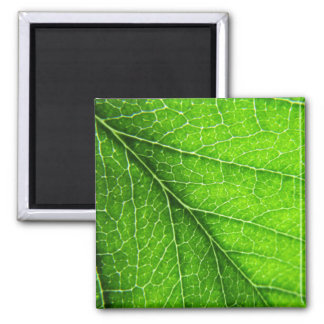 Green leaf texture 2 inch square magnet