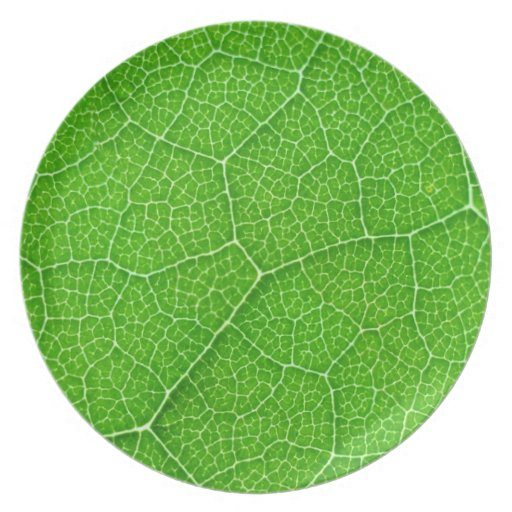 green leaf texture plate plant nature