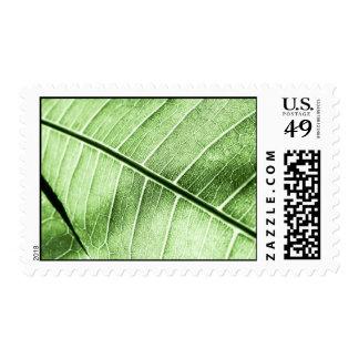 Green Leaf Vein Postage