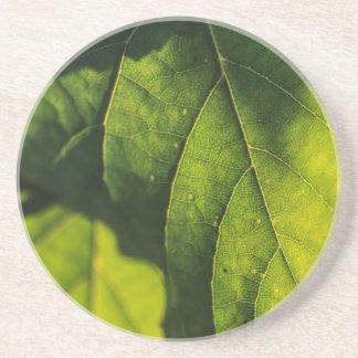 Green Leaf Veins Drink Coaster