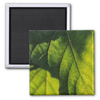 Green Leaf Veins Magnet