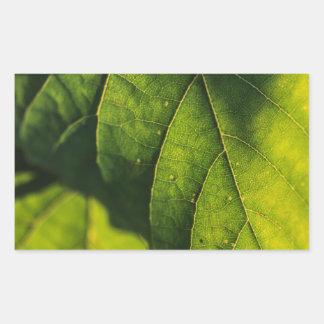 Green Leaf Veins Rectangular Sticker