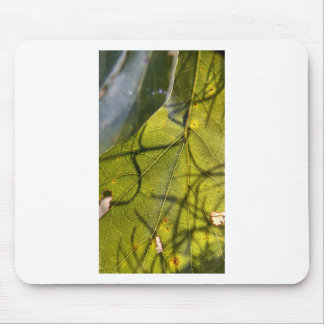 green leaf with Spanish moss tendrils in silhouett Mouse Pad