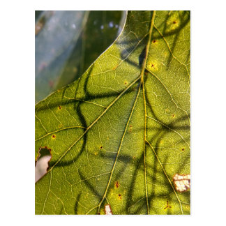 green leaf with Spanish moss tendrils in silhouett Postcard