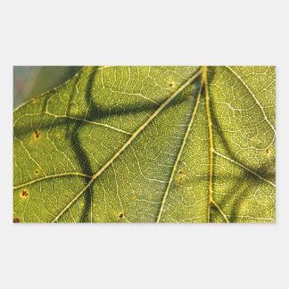 green leaf with Spanish moss tendrils in silhouett Rectangular Sticker