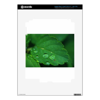 Green Leaf with Waterdrops iPad 3 Decal