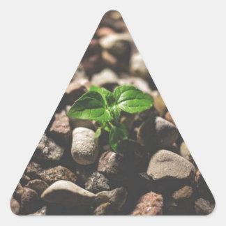 Green Leafy Plant Starting to Grow on Beige Racks Triangle Sticker