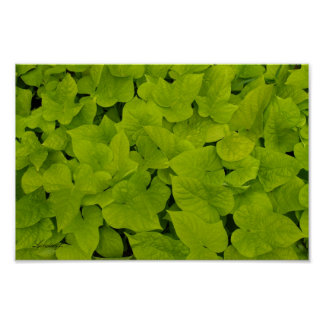 Green Leafy Texture Background Canvas or Poster