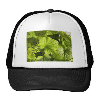 Green leafy vegetables hats