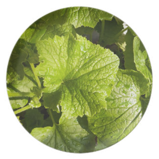 Green leafy vegetables plate