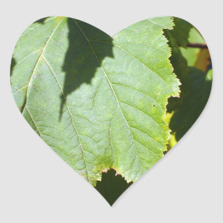 Green leaves close-up that begin to turn yellow heart sticker
