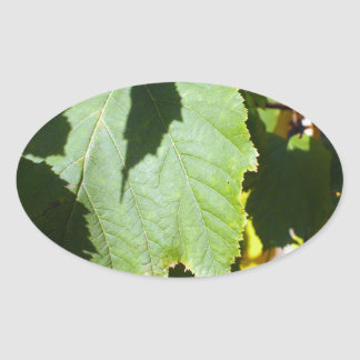Green leaves close-up that begin to turn yellow oval sticker