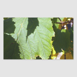Green leaves close-up that begin to turn yellow rectangular sticker