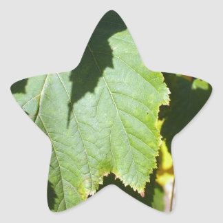 Green leaves close-up that begin to turn yellow star sticker