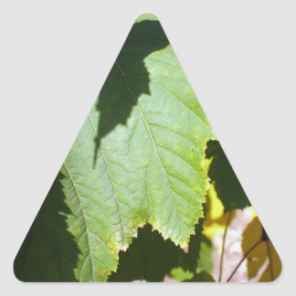 Green leaves close-up that begin to turn yellow triangle sticker