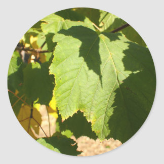 Green leaves closeup that begin to turn yellow classic round sticker