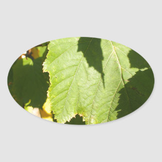Green leaves closeup that begin to turn yellow oval sticker