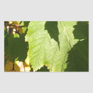 Green leaves closeup that begin to turn yellow rectangular sticker