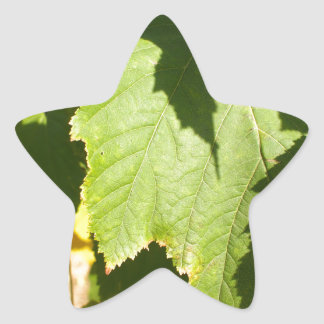 Green leaves closeup that begin to turn yellow star sticker