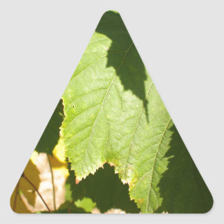 Green leaves closeup that begin to turn yellow triangle sticker