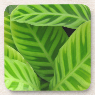 Green Leaves Coaster