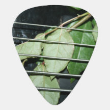 green leaves five string bass musical instrument guitar pick