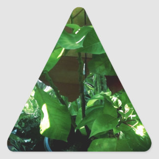 Green Leaves, Foliage and Plant Triangle Sticker