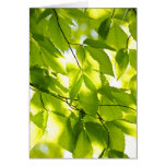 Green  leaves in spring stationery note card