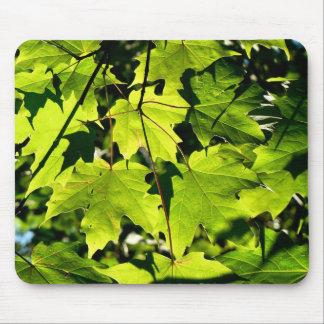 Green leaves in sun mousepad