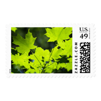Green leaves in the woods postage stamp