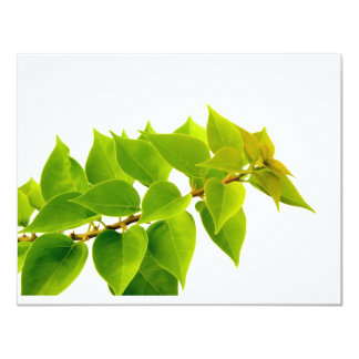 "Green leaves 4.25"" x 5.5"" invitation card"