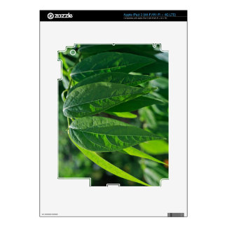 Green Leaves iPad 3 Decals