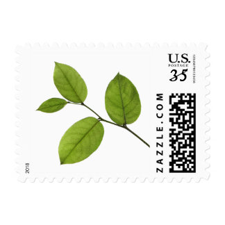 Green Leaves Nature stamps