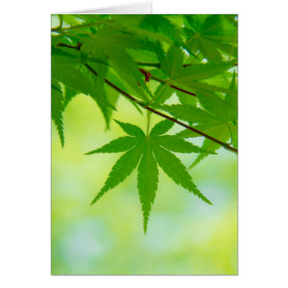 Green leaves of Japanese maple Card
