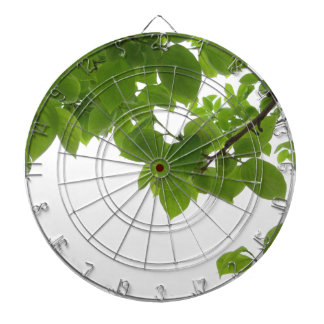 Green leaves of persimmon tree on white background dartboard
