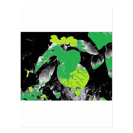 Green Leaves on Black Postcard