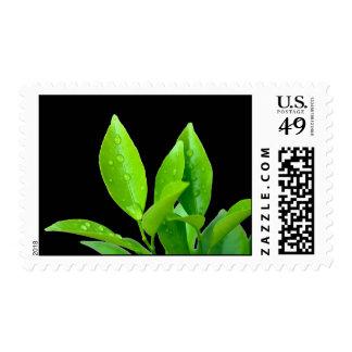 Green Leaves on Black - Stamp