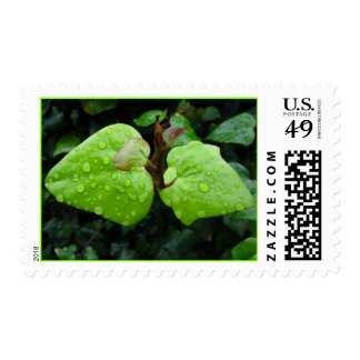 Green Leaves Postage Stamps