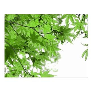 Green Leaves Postcard
