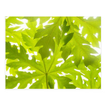 Green leaves postcard