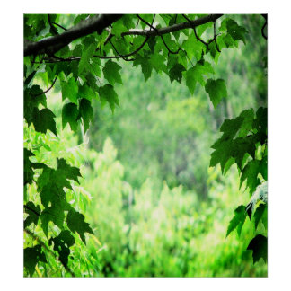 Green Leaves Print