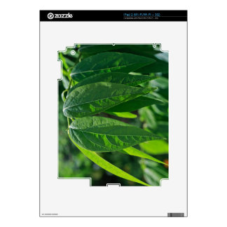 Green Leaves Skin For The iPad 2